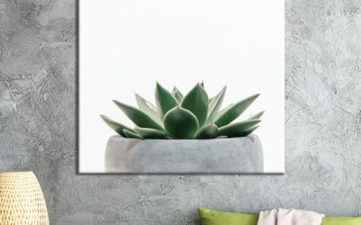 5 Succulent Living Room Facts You Should Know