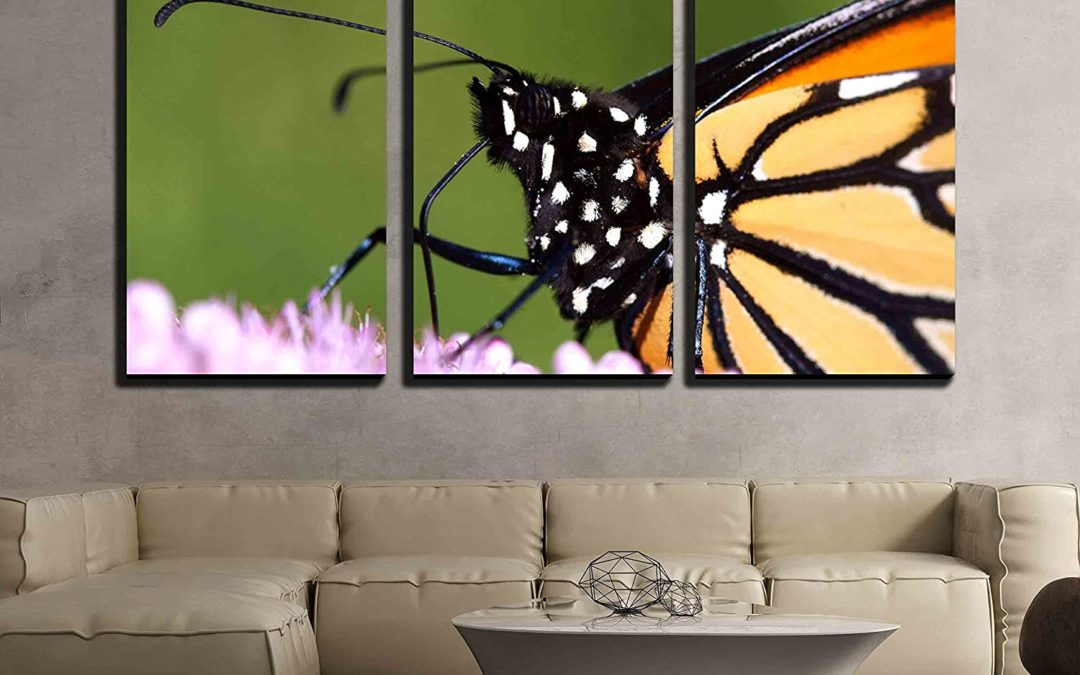 5 Butterfly Home Decor Facts
