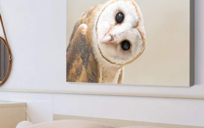 5 Owl Wall Art Facts You Need to Know!