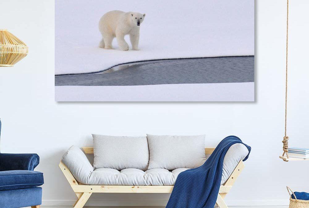 5 Polar Bear Wall Art Facts That You'll Really Love!